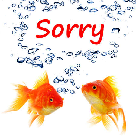 i am sorry: sorry concept with word and goldfish isolated on white background Stock Photo