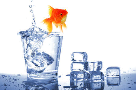 fishtank: goldfish in water glass fishtank isolated on white background