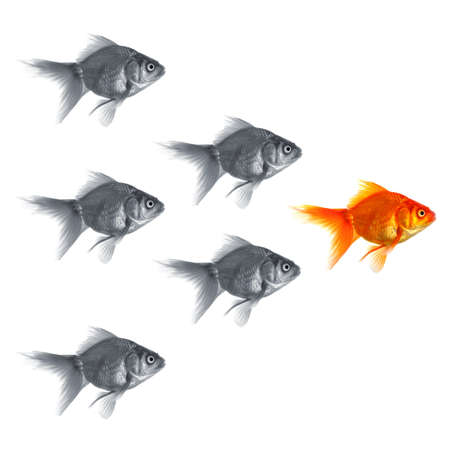 goldfish showing discrimination success individuality leadership or motivation concept Standard-Bild