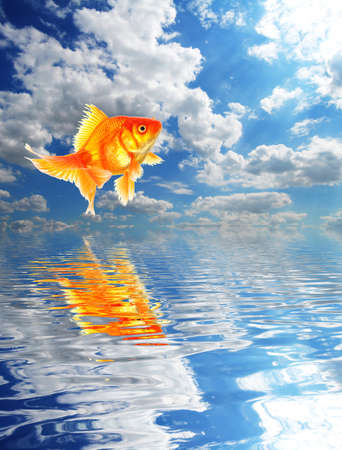 blue sky goldfish with water reflection clouds and copyspace Stock Photo - 8840876