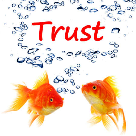 confide: trust word and goldfish showing assurance confidence or protection concept Stock Photo