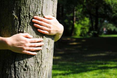 sustentabilidad: abrazando un �rbol con manos shwing naturaleza ecoecology o concepto ambiental Foto de archivo