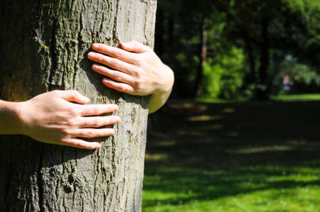 sustainability: embracing a tree with hands shwing nature ecoecology or environmental concept