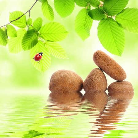 Zen Stones und grünen Sommer Blätter mit Water reflection