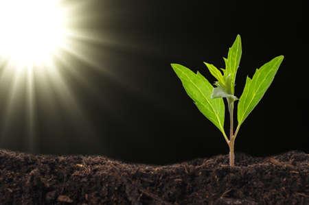 groei of nieuw leven concept met kleine plant zon en copyspace