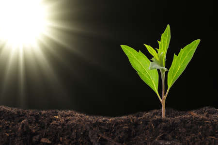 black seeds: growth or new life concept with small plant sun and copyspace