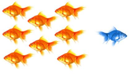 Goldfish Ergebnis Führer Individualität Erfolg oder Motivation Konzept Lizenzfreie Bilder