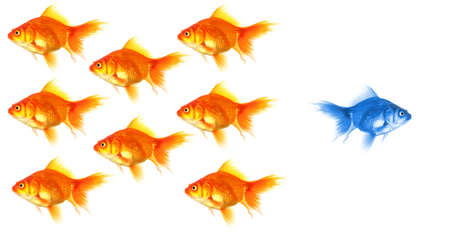 different concept: goldfish showing leader individuality success or motivation concept