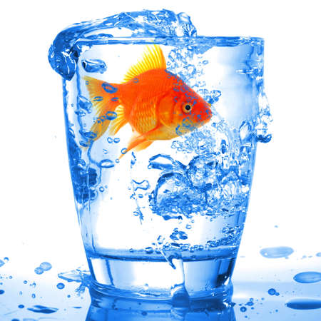 goldfish in cocktail drink glass and water showing bar flee free or jail concept Stock Photo - 9011730