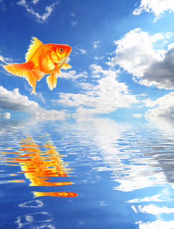 blue sky goldfish with water reflection clouds and copyspace Stock Photo - 9011782