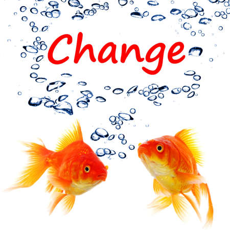 change ahead or future concept with word and goldfish photo