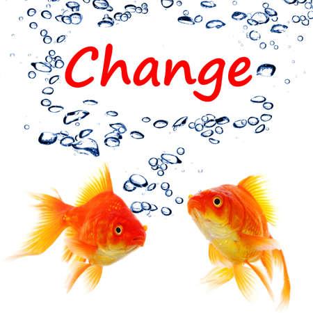 Ändern Sie ahead oder zukünftige Konzept mit Word und Goldfische Lizenzfreie Bilder
