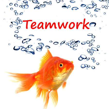 teamwork or team concept with word and goldfish on white Stock Photo - 9011703