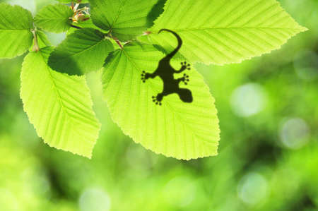 tropical background with leaf and gecko or lizard animal photo