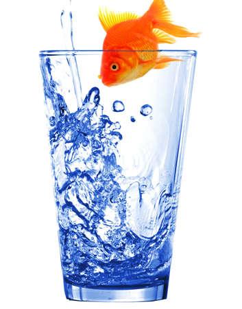 goldfish in water glass fishtank isolated on white background Stock Photo - 9083719