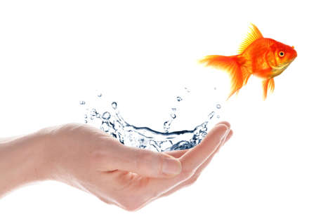 flee: freedom free flee or escape concept with goldfish and hand