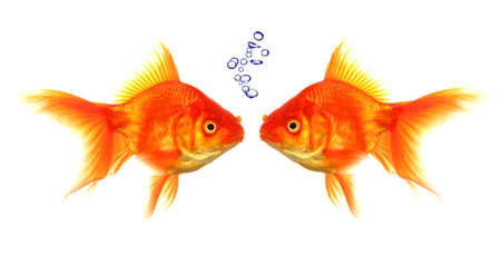 goldfish with bubbles showing discussion talk or conversation concept photo