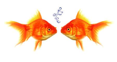 pez dorado: pececito de burbujas que muestra el concepto de charla o conversaci�n de discusi�n Foto de archivo