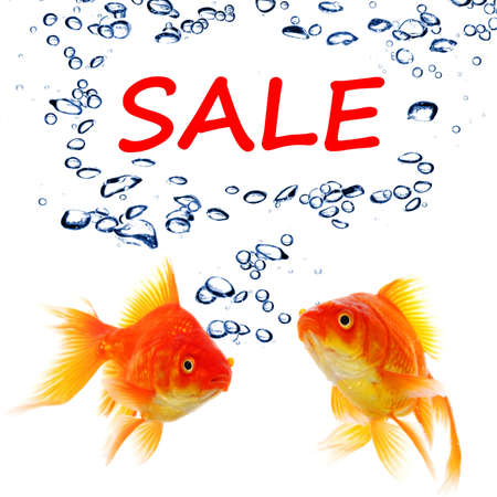 sale marketing or shopping concept with goldfish on white photo