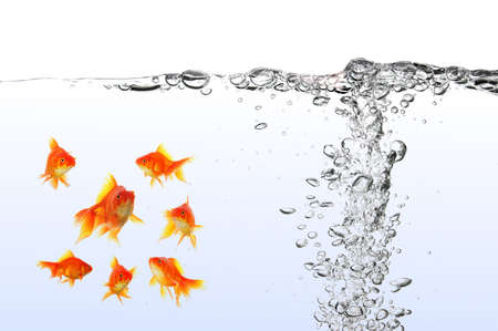 goldfish under water with bubbles and copyspace on white photo