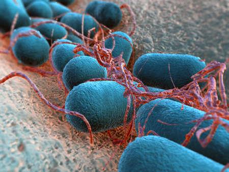 bakterien: Escherichia coli Bakterium Lizenzfreie Bilder