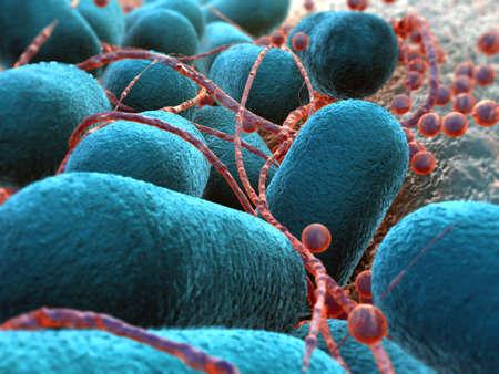bacterium Escherichia coli Stock Photo - 9679764