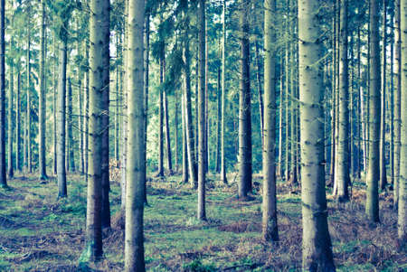 Forest vintage look Stock Photo - 11996274