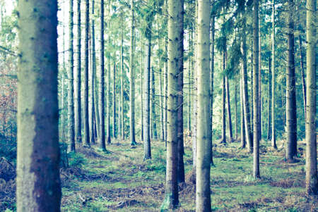 Forest vintage look Stock Photo - 11996273