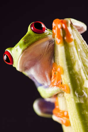 Colorful frog   photo