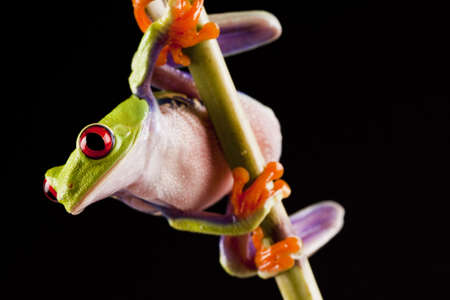 Frog on Lear