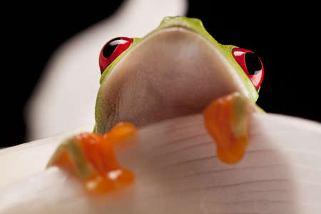 lear: Frog on Lear