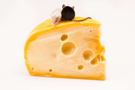 Mouse vs. cheese Stock Photo - 6128086