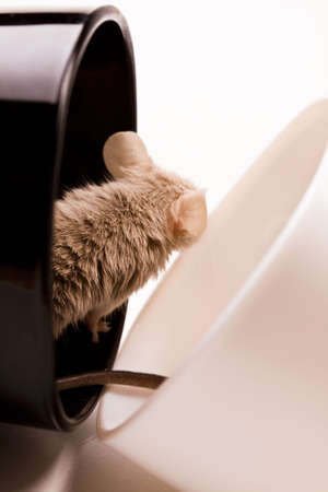 Mouse in a cup   photo
