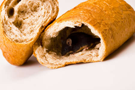 Mouse on bread   Stock Photo - 6128187