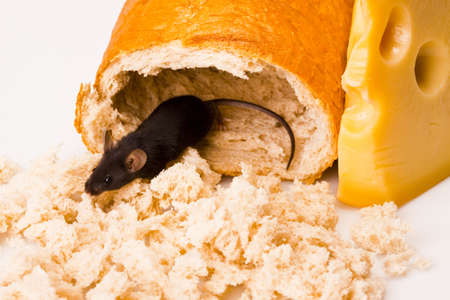 chees: Mouse on bread