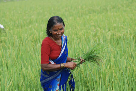 sweltering: Happy female farmer in India
