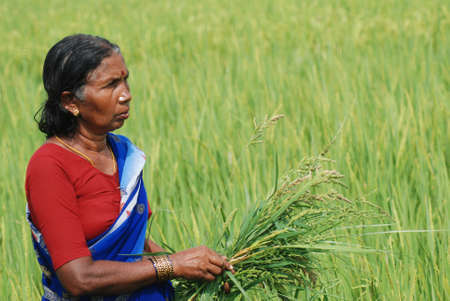 sweltering: Female farmer in India Editorial