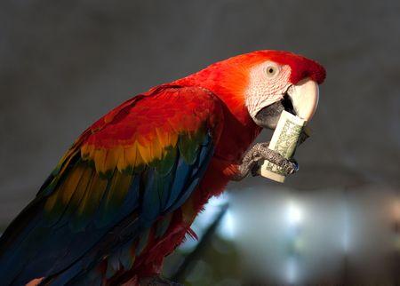 psittacidae: parrot eats one dollar bill Stock Photo