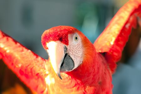 psittacidae: colorful Parrot