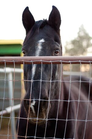 horse looking sad over fence in the camera photo