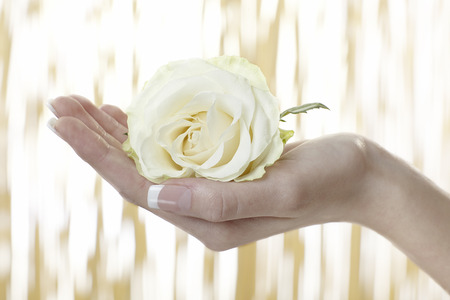 Human hand holding a flower photo