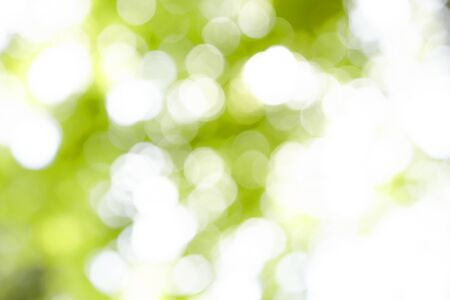 Fuzzy leaves as a background Standard-Bild
