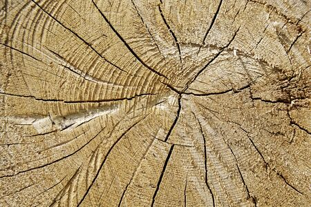 i t: Tree trunk with annual rings as background Stock Photo