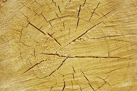 Tree trunk with annual rings as background Standard-Bild
