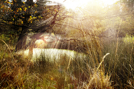 Sunny deciduous trees Standard-Bild