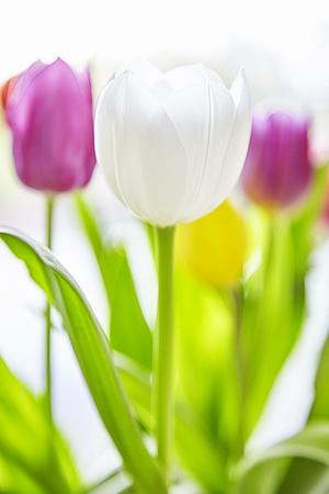 Spring Tulip bouquet Like