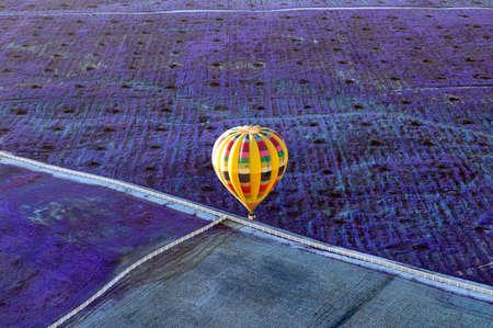 Globo de aire caliente amarillo sobre un campo de lavanda en Temecula, California. Foto de archivo