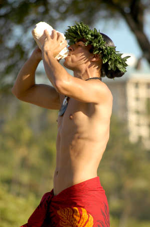 A masculine male hula dancer blow a conch shell to start the performance. Stockfoto
