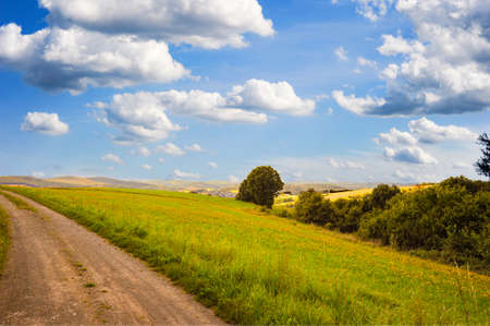 Beautiful skies with puffy white clouds over files of yellow flowers and a dirt road disappearing into the hills.