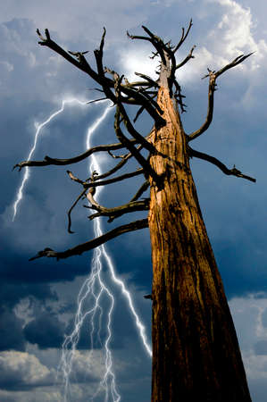 An old dead pine tree that was hit by lightening is in danger of being hit again by an approaching thunder storm.